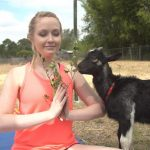 Student taking goat yoga at Wildflower Farms in Orladno Florida. Black goat looks on as student performs a pose.
