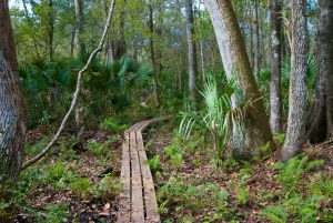 florida trail in charles bronson state park